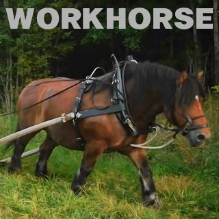 Workhorse